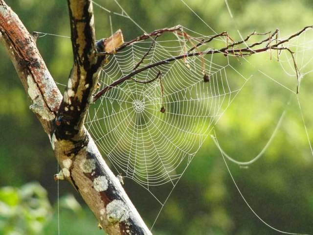 spider-dream